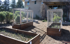 From Kirsch to kitchen, students sow sustainable crops