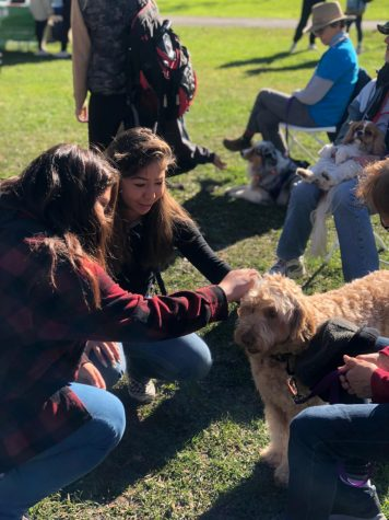 Students pet dogs provided by the organization, 'Furry Friends', in the S Quad on Nov 6.