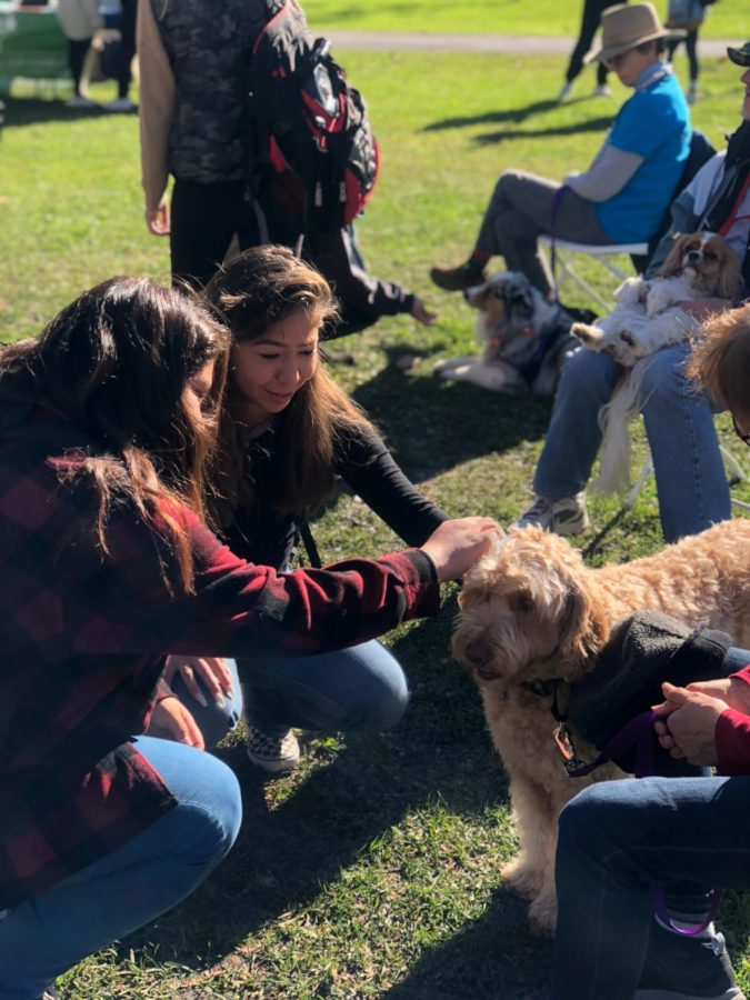 Students+pet+dogs+provided+by+the+organization%2C+%27Furry+Friends%27%2C+in+the+S+Quad+on+Nov+6.