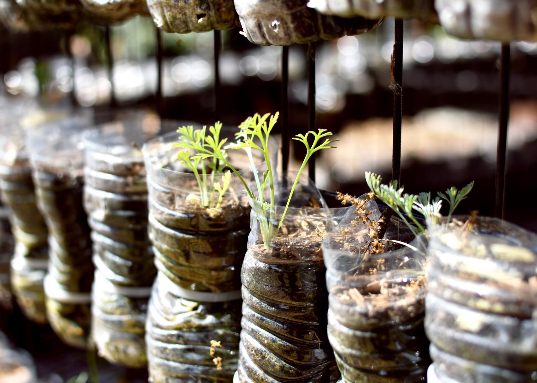 New growth in vertical garden.