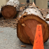 De Anza College cuts-down campus' largest redwood tree