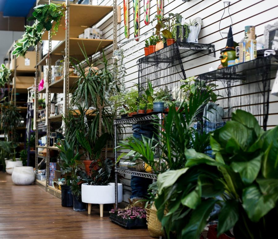 Plants and local art fill the boutique from wall to wall.